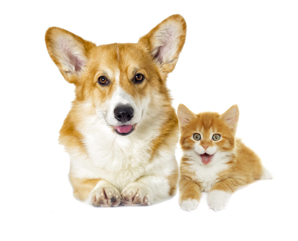 photo of yellow dog and yellow cat